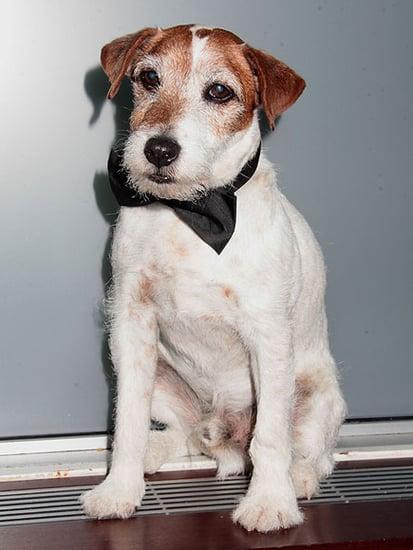 Uggie the Dog, Star of <em>The Artist</em>, Has Died at 13, Jean Dujardin Pays Tribute