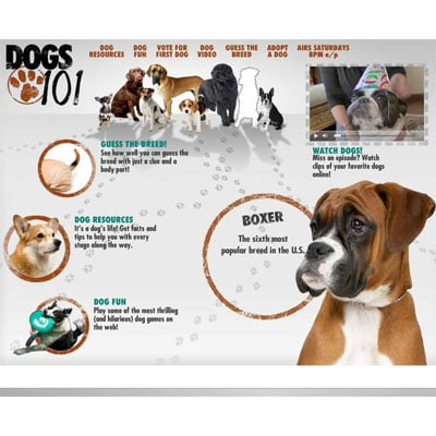 What Did We Learn About the Latest Breeds on Dogs 101?