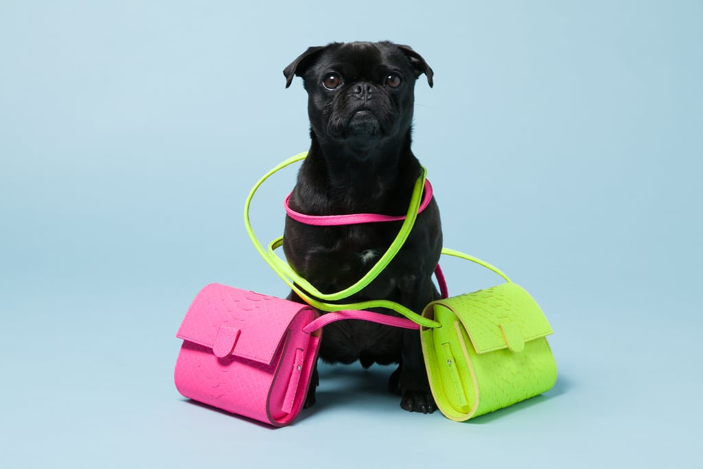 Pepper with Nina Peter's Python Box Bags ($475). Photo courtesy of Avenue32.