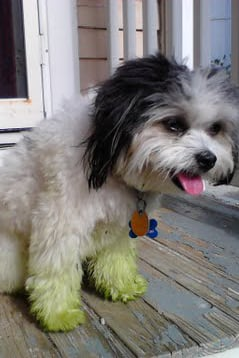 Pet Pic of the Day: Feeling Green