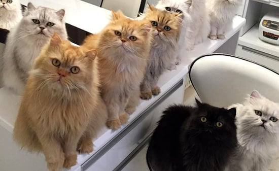 "Japan's ""12 Cats Lady"" Delivers Photo Delights on Instagram"