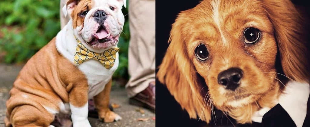 18 Dapper Dogs Dressed Up For National Bow Tie Day