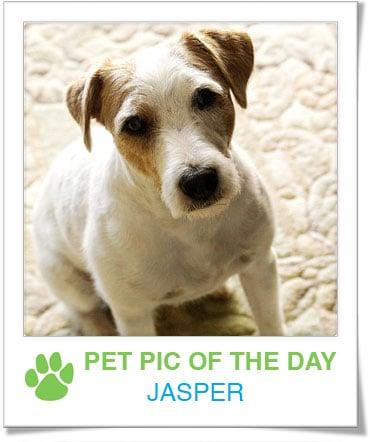 Pet Pics on PetSugar 2009-04-17 09:00:14