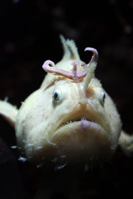 Pictures of Weird Sea Creatures