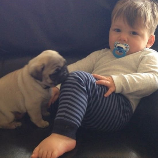 Toddler and Pugs Instagram