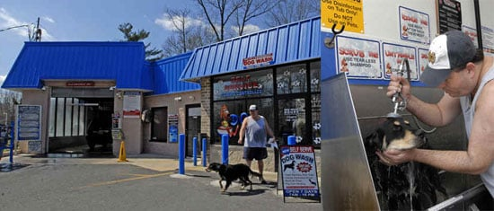 Brilliant or Baffling? The Dog Wash/Car Wash Hybrid
