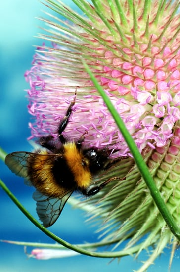 Honey Bees Are Disappearing