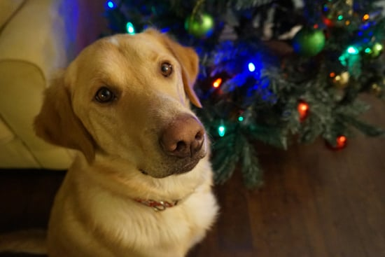 10 Thoughtful Holiday Gifts for New Dog Owners