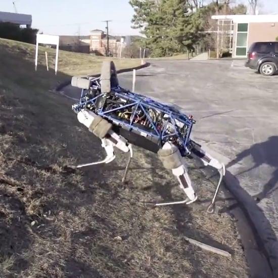 Spot Boston Dynamics Robot