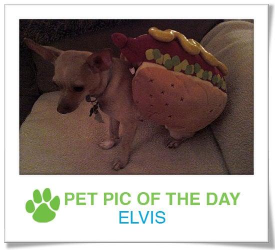 Pet Pics on PetSugar 2009-01-06 09:30:58