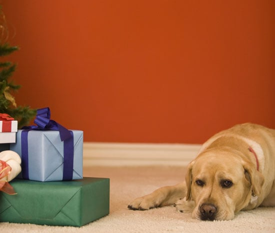 How Much Should I Buy My Dog For Christmas?