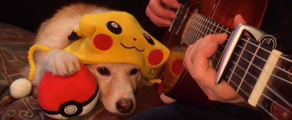 In Today's Pokémon Go News, Maple the Dog Will Not Be Catching 'Em All