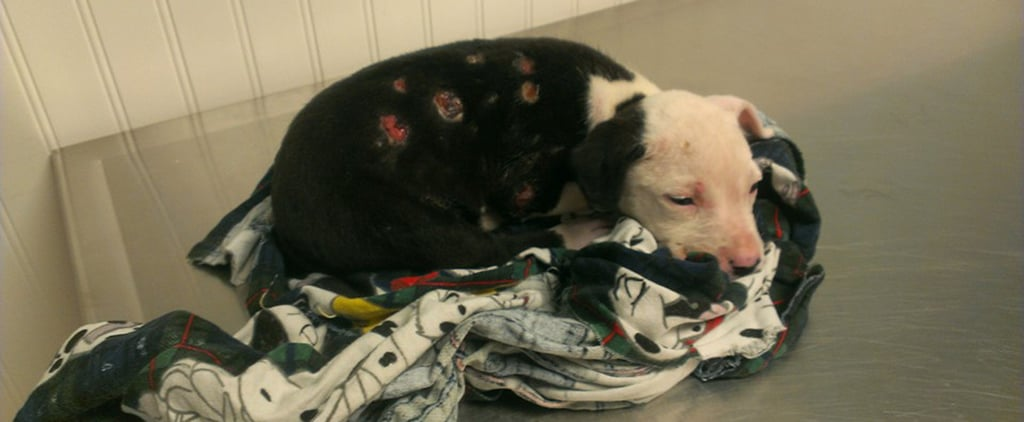 This Firehouse Dog Got a Second Chance at Life After Being Rescued From a Burning Building