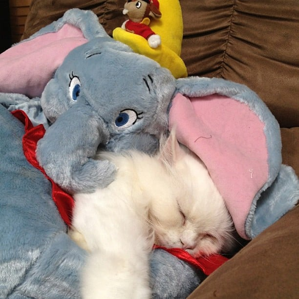But nothing beats a good cuddle. Source: Instagram user georgethekat