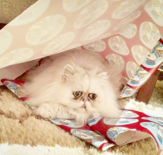 Behold These Cats Enjoying the Christmas Wrapping Aftermath
