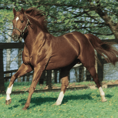 Fun Facts About the 11 Triple Crown Horse Racing Winners
