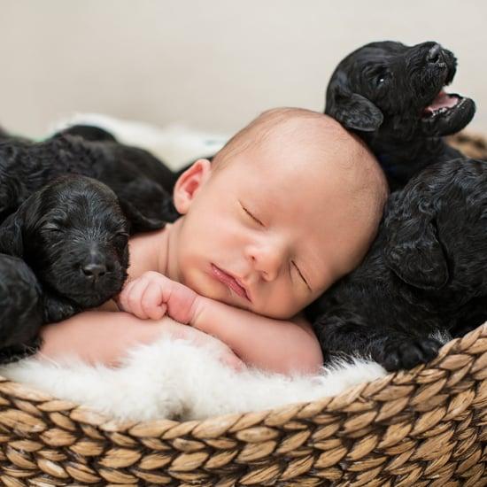 Newborn Baby and Puppies Photo Shoot