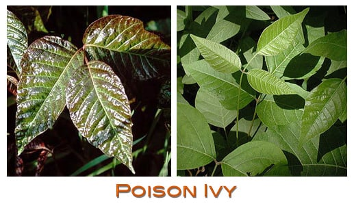 Watch Out For: Poison Ivy
