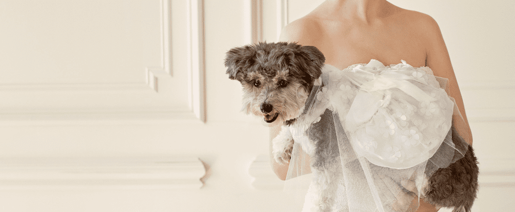 Your Dog Will Be the Best Dressed on Your Wedding Day in These Snazzy Duds