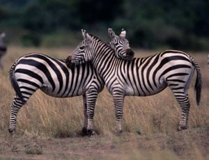 5 Sex Lessons From the Animal Kingdom