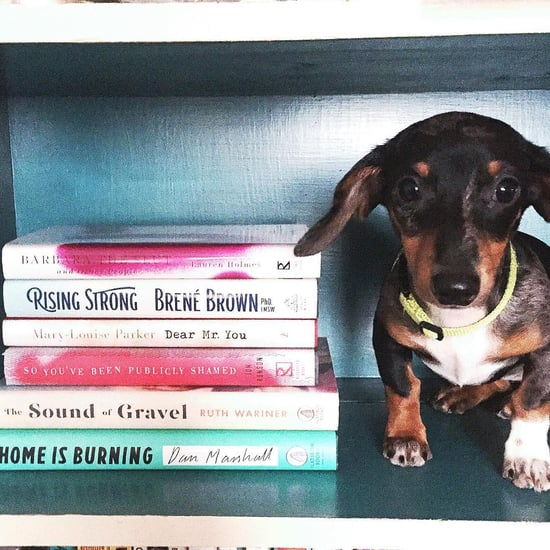 Animals With Books | Pictures