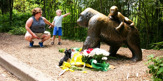 The Cincinnati Zoo Mother Deserves Empathy, Not Judgement