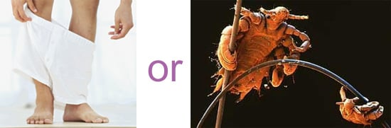 Which Is Worse?  Streaks or Crabs