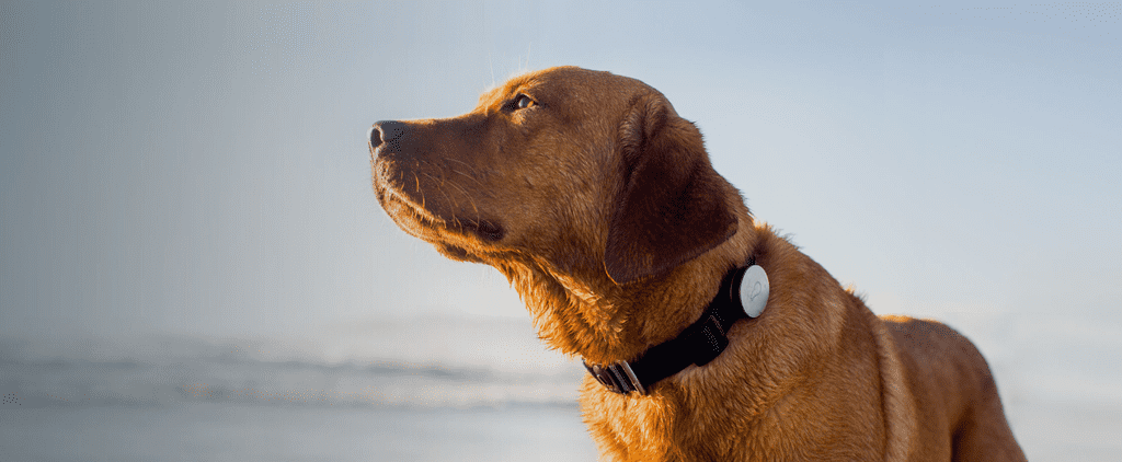 3 Pet-Friendly Gadgets to Keep Furry Friends Healthy