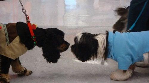 Pocahontas and 50s Dog Say Hello
