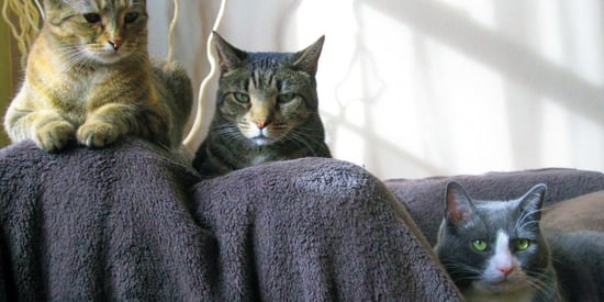 Everything You Want To Know (But Are Afraid to Ask) About Cat Parenthood