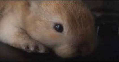 Cute Alert: Baby Bunny
