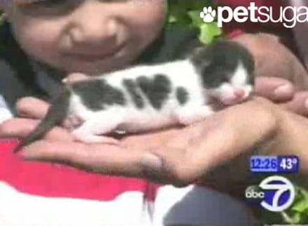 Tiny Kitty Spots