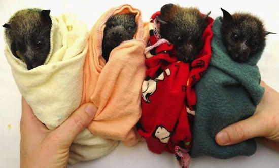 Trivia About Bats