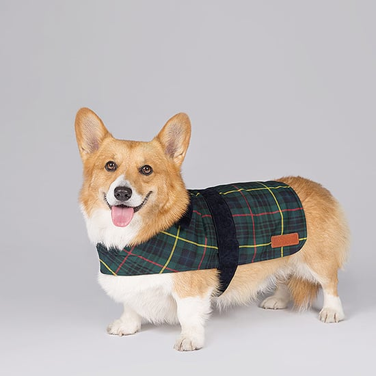 Now Your Dog Can Dress Like the Queen! (Really. In the Exact Same Tartan)