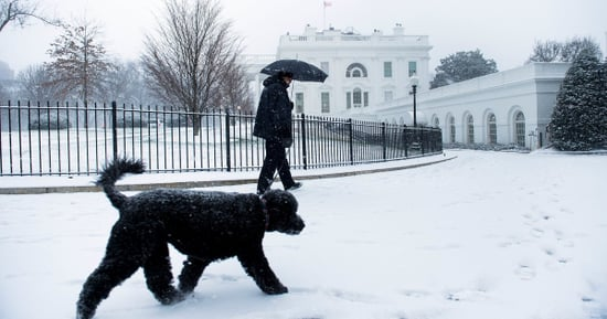 Bo And Sunny Obama Are Having A Great Snow Day