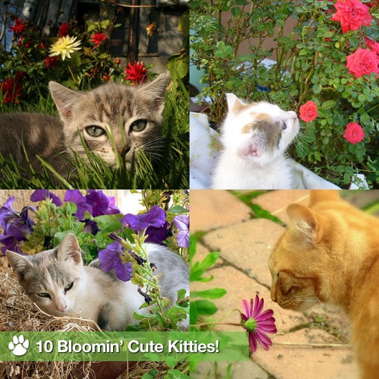 Pictures of Cats Sniffing Flowers