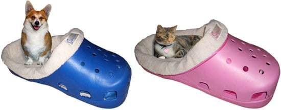 Sasquatch Pet Bed: Spoiled Sweet or Spoiled Rotten?