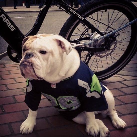 Instagram Challenge: Super Bowl Pets
