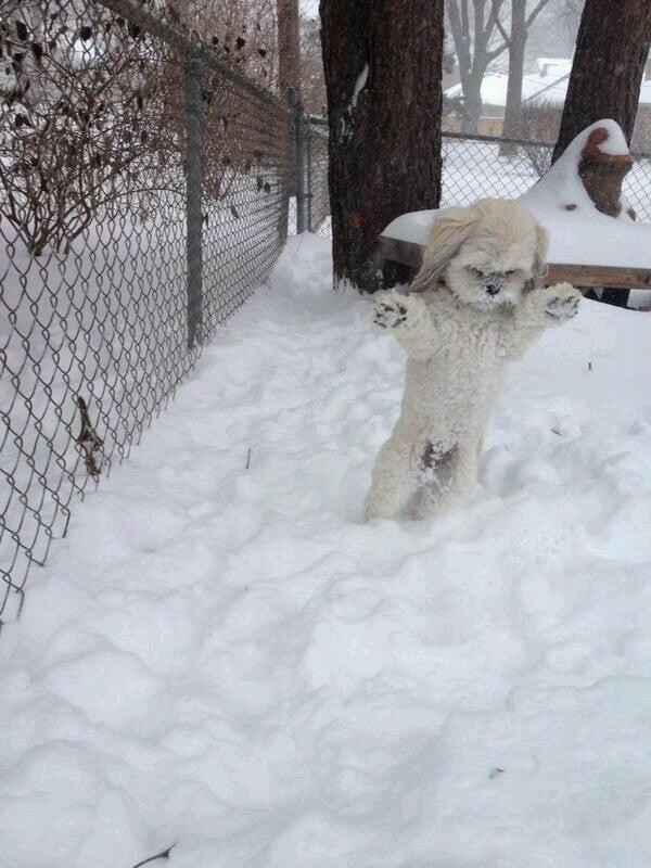 """Minnesota Yeti Caught on Film"" Source: Reddit user StewPaddasso"