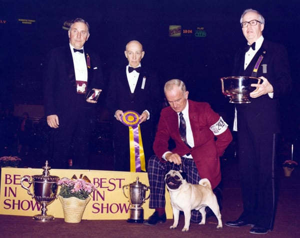 Ch Dhandys Favorite Woodchuck, a pug, won in 1981. Source: American Kennel Club Archives