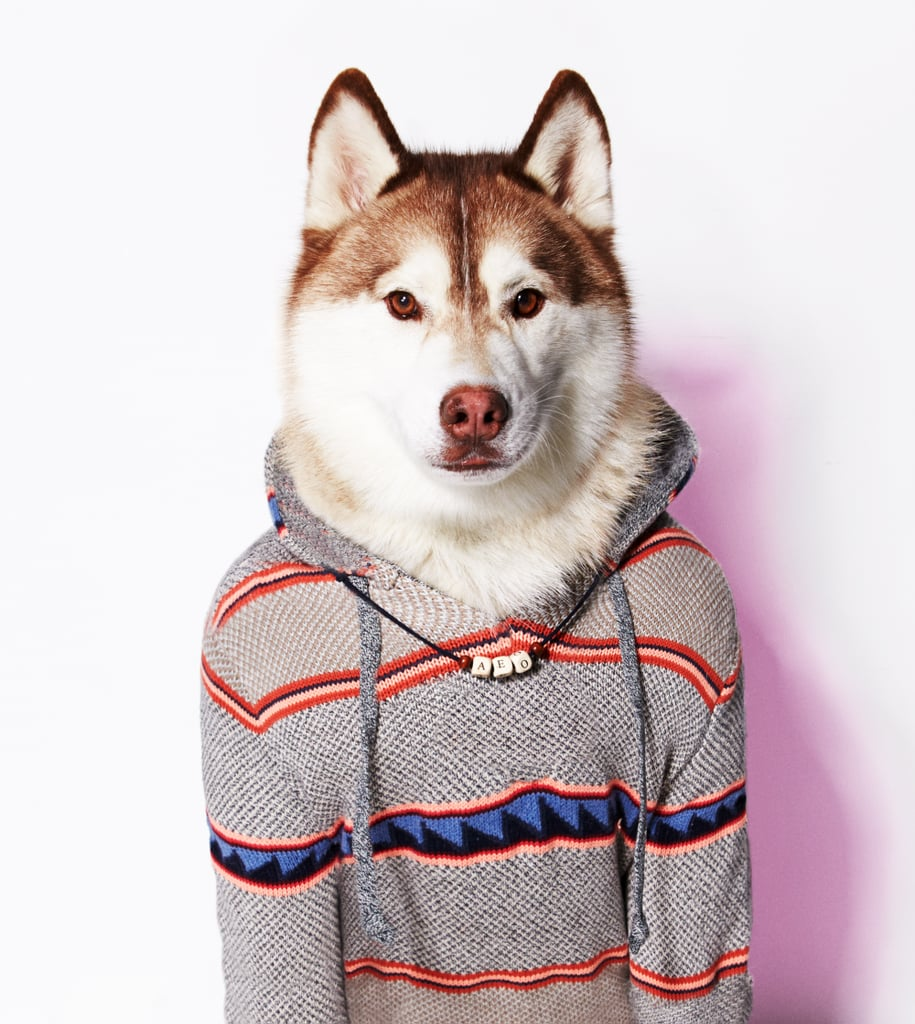 American Eagle Outfitters Launches American Beagle ...  Dog Jacket American Eagle Outfitters