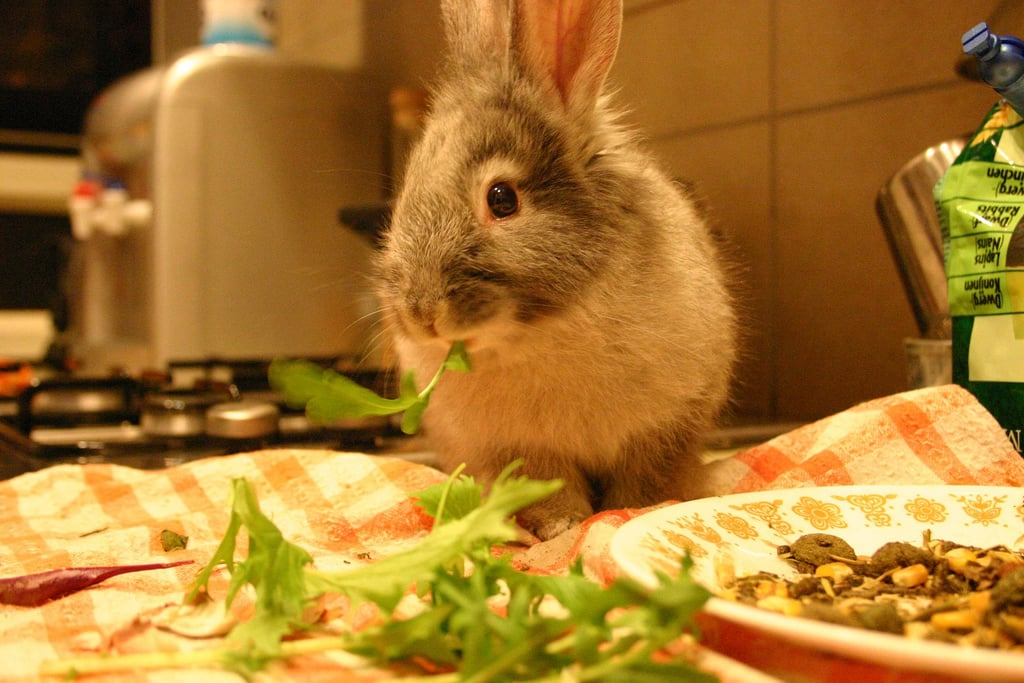I'll Start With the Salad