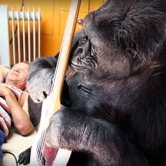 'This is the Day That I Will Never Forget': Flea Has a Jam Session with Koko the Gorilla