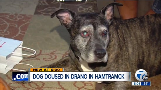 Thieves Douse Dog in Drano During Michigan Home Invasion