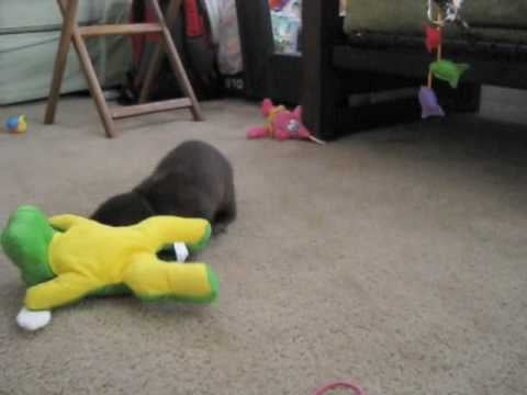 TGIF and For This Adorable Baby Otter Video