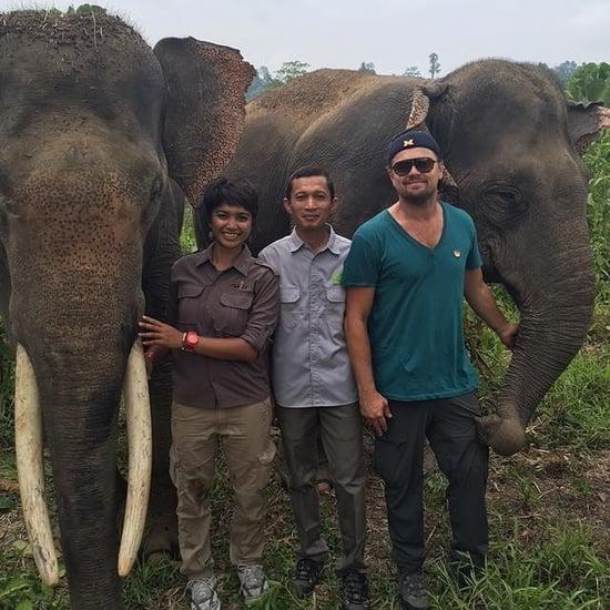Leonardo DiCaprio Visits Indonesia March 2016