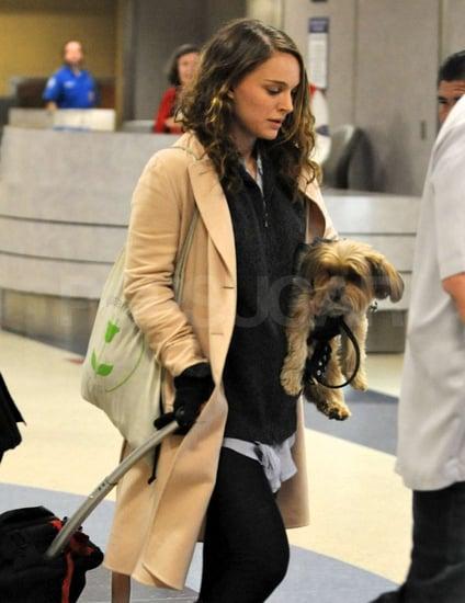 Pictures of Natalie Portman Pregnant 2011-01-04 21:12:21