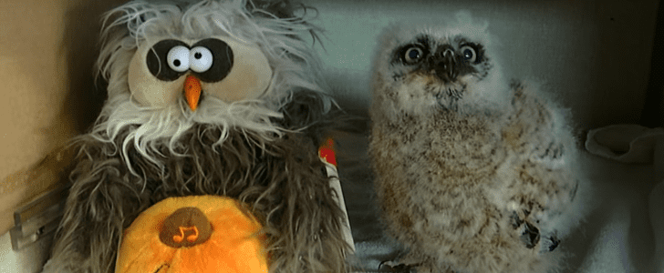 Who Does the Monster Mash Better Than This Owl? Nothing and No One
