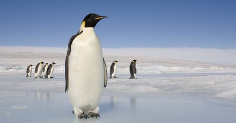 Getty Is Quietly Charging Bloggers For 'Socially Awkward Penguin' Meme