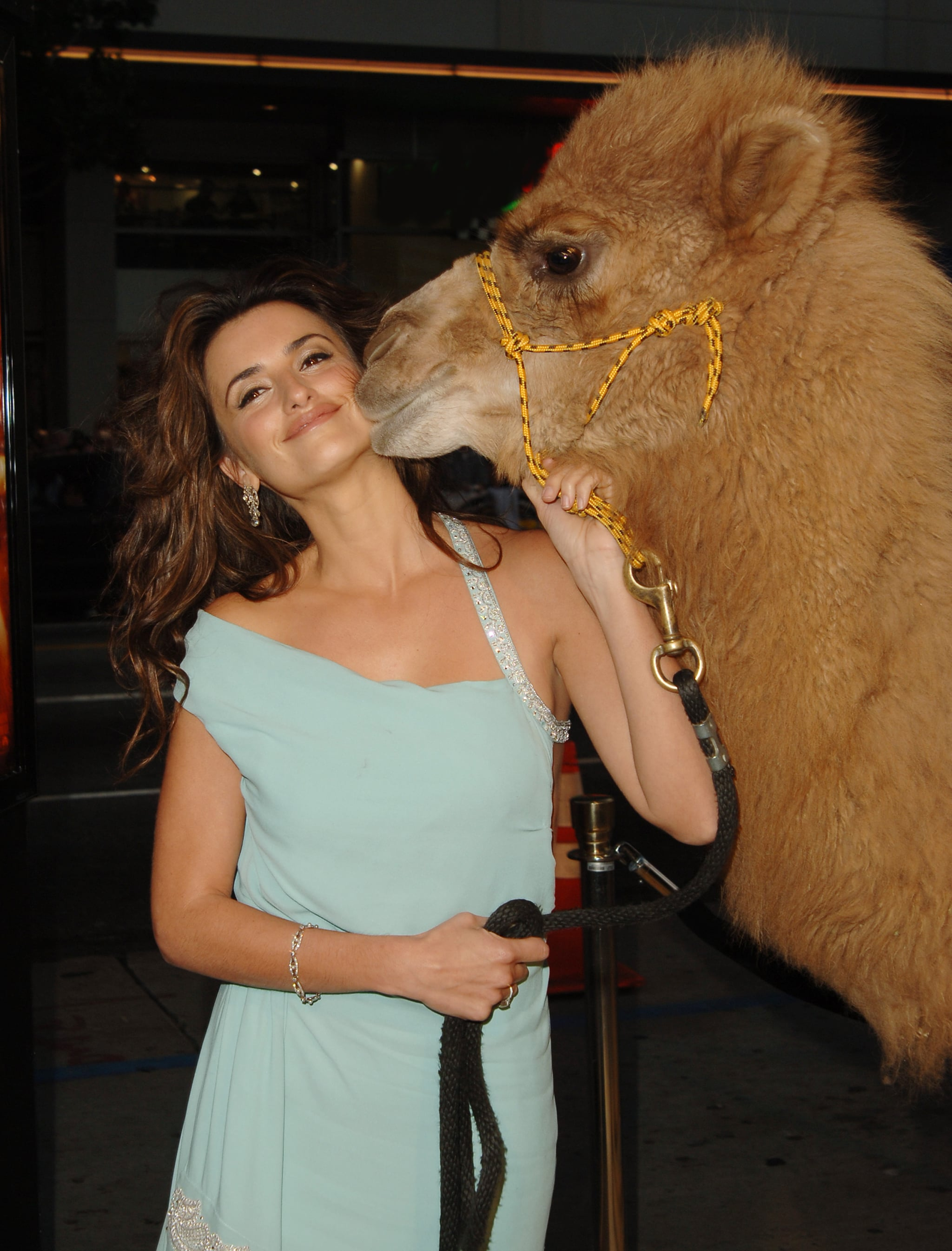 We hope Javier isn't jealous of this dromedary Lothario. The camel accompanied Penélope Cruz to the premiere of 2005's Sahara.